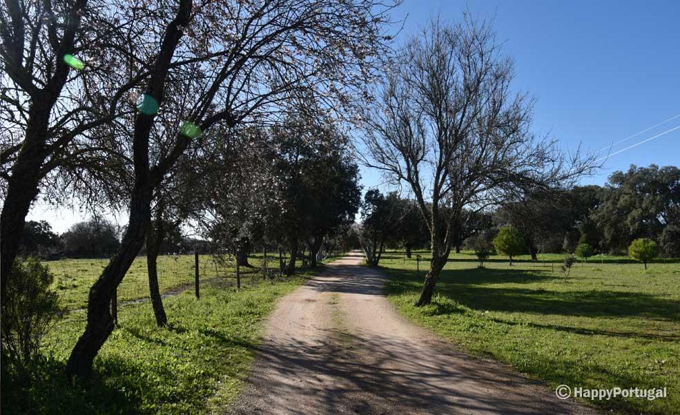 Portugal, Elvas, Monte da Proença, Monte Alentejano